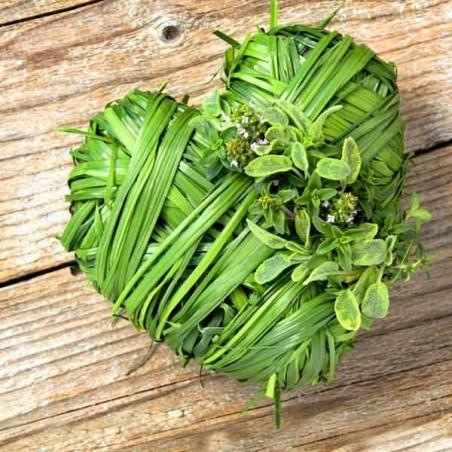 Erboristeria: curarsi con le erbe